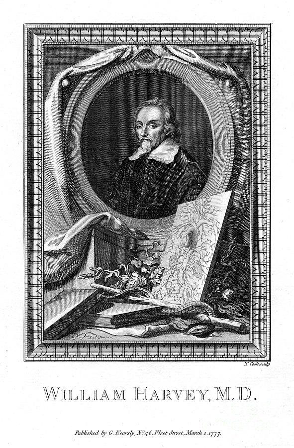William Harvey, Medical Doctor Drawing by Print Collector