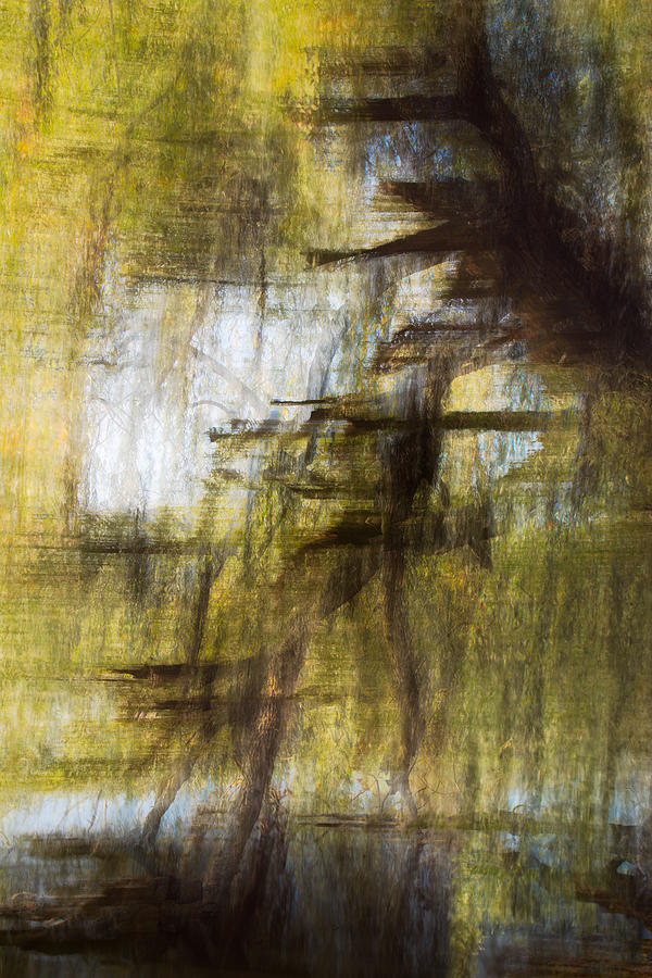 Willow by Dalibor Hanzal