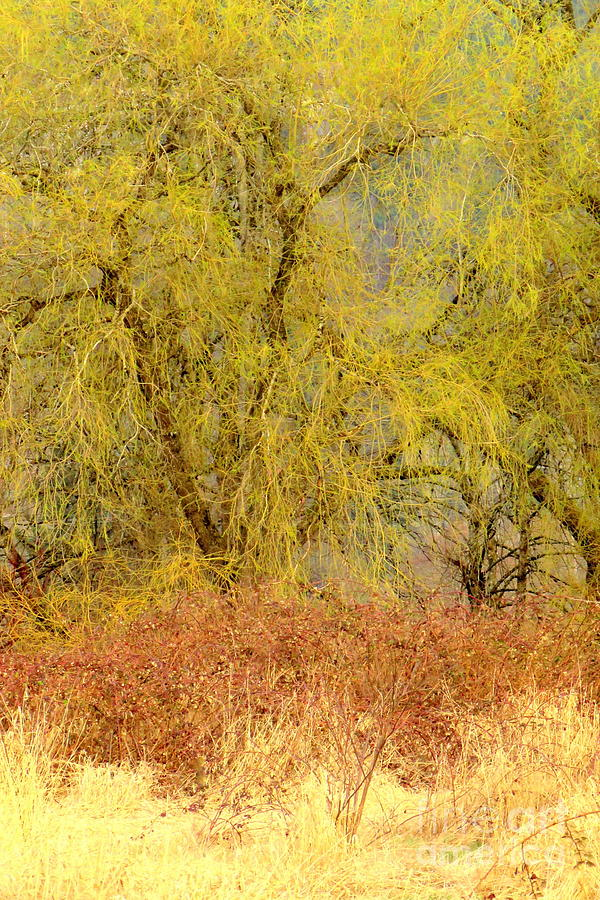 Willow Forest by Frank Townsley