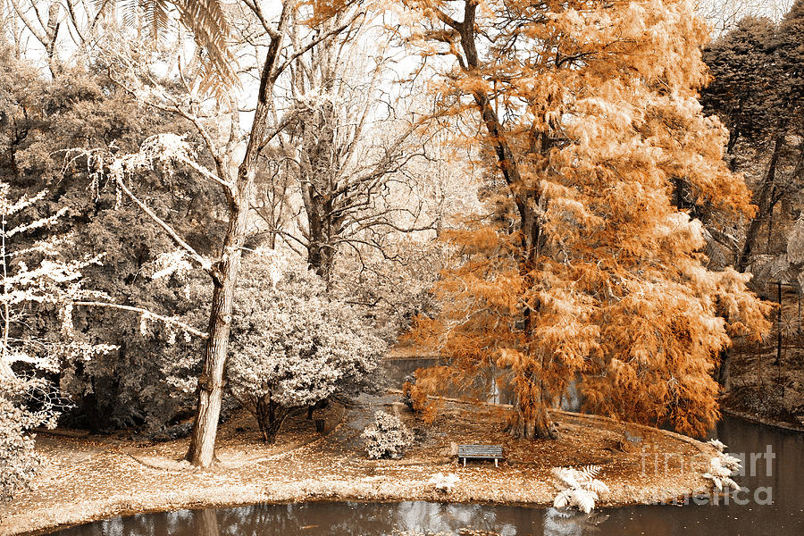 Infrared Photograph - Willow Tree by Gaspar Avila