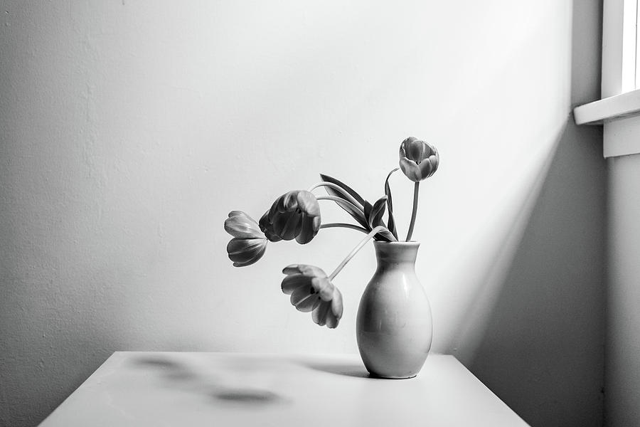 Tulips Photograph - Wilting tulips by the window by Natalie Board