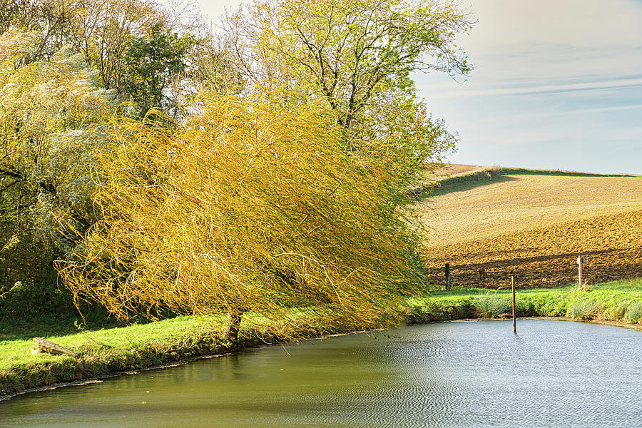 Wind Photograph - Wind In The Willow by Michael Briley