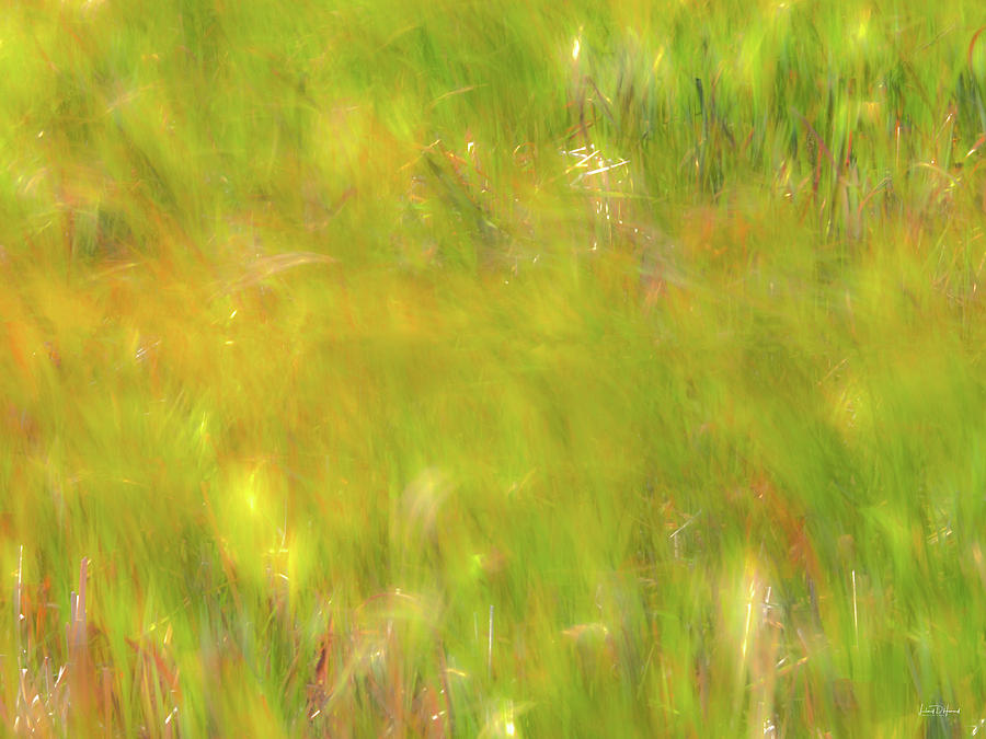 Form Photograph - Wind Painting 4 by Leland D Howard