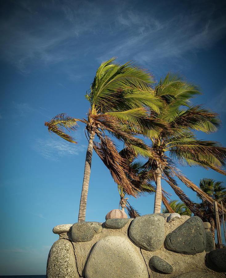 Wind Swept Palms by Jean Noren