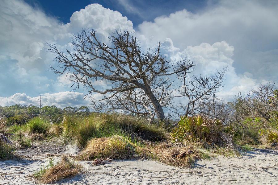 Windblown under the Clouds by Debra and Dave Vanderlaan