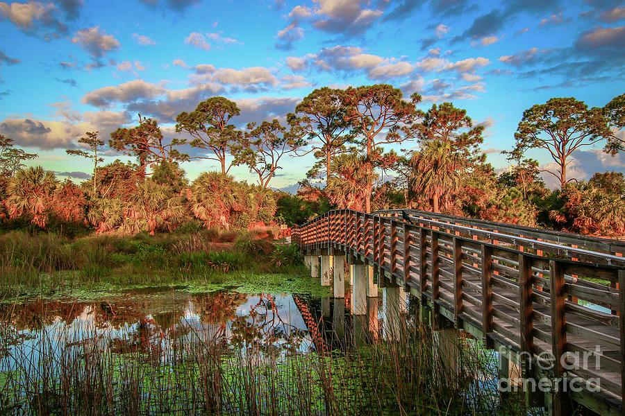 Winding Waters Boardwalk by Tom Claud
