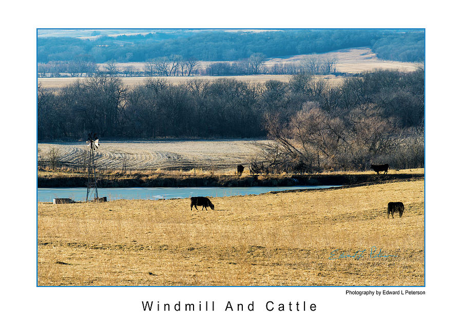 Windmill And Cattle by Edward Peterson