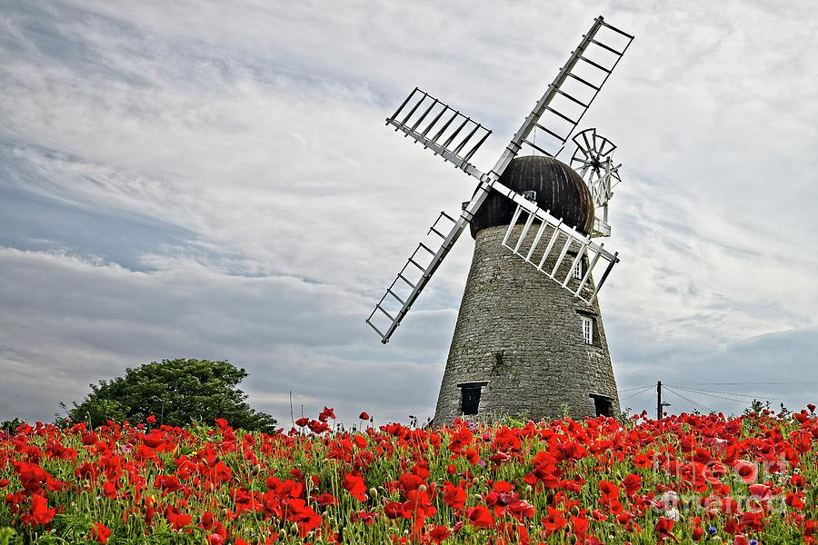Windmill and Poppies by Martyn Arnold