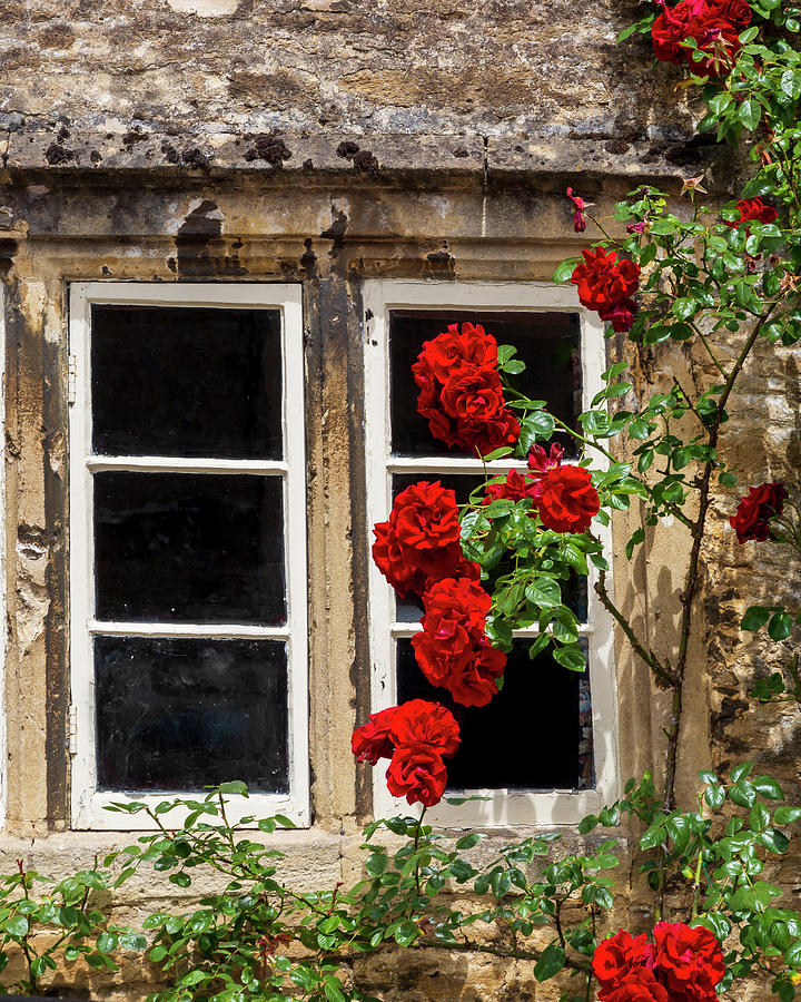 Window and Climbing Roses by Adam Romanowicz