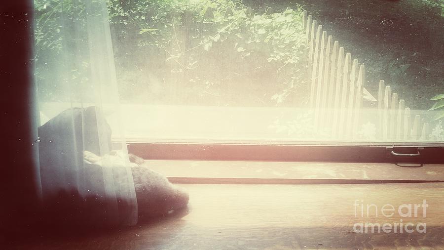 Window Sill Cat by Jenny Revitz Soper