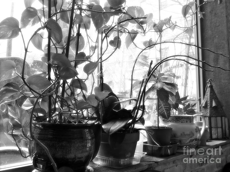 Window Sill Winter Garden Photograph