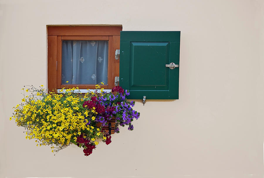 Window With Flowers Photograph by Enzo D.