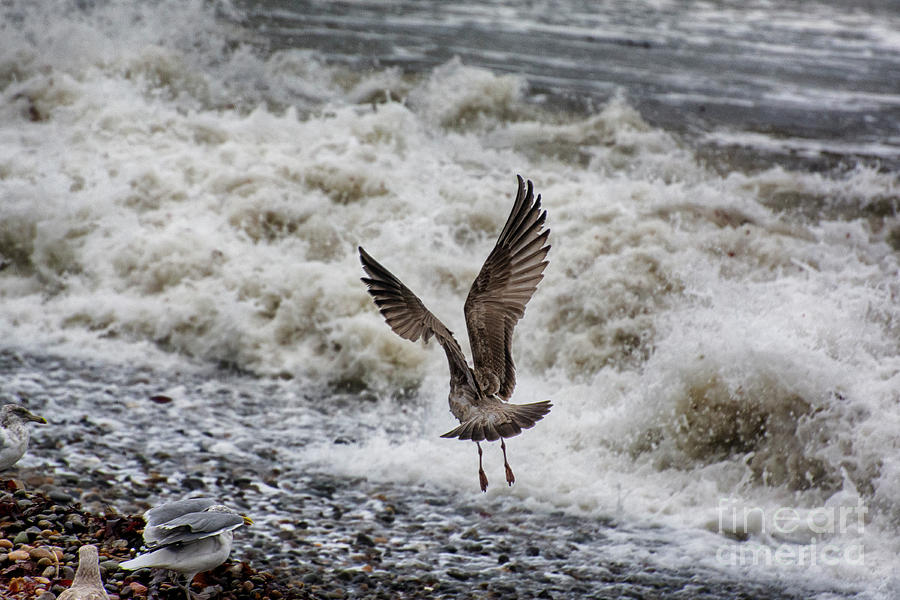 Windy Flight by Ruth H Curtis