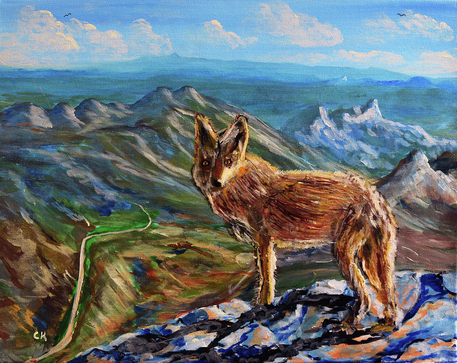 Windy Point Coyote by Chance Kafka
