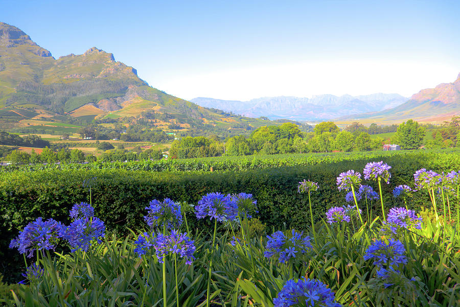 Wine Country Scenic In Stellenbosch South Africa Photograph