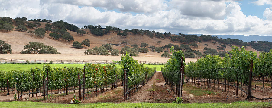 Wine Country Scenic Photograph by S. Greg Panosian