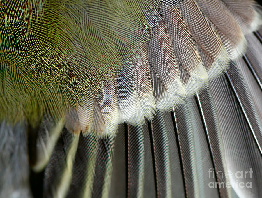 Feather Photograph - Wing Of The Great Tit Close Up by Mycteria