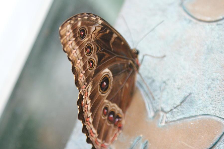 Winged Reflection by Stephanie Pieczynski