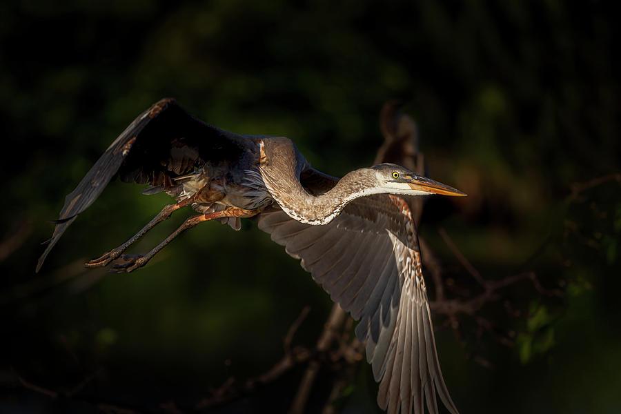 Winging My Way Home by Cyndy Doty