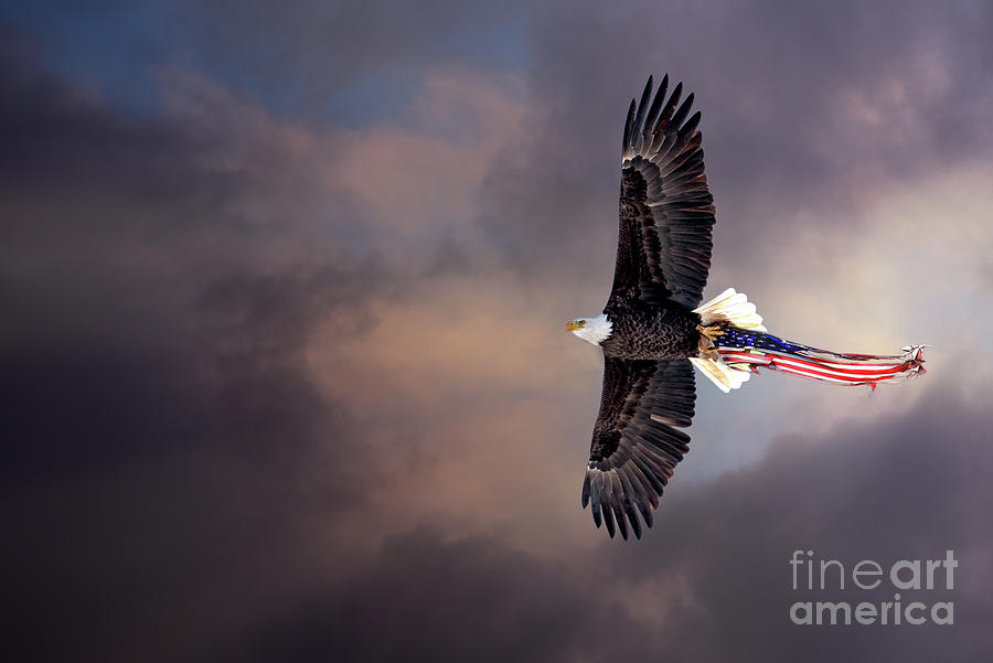Wings Of Freedom Photograph