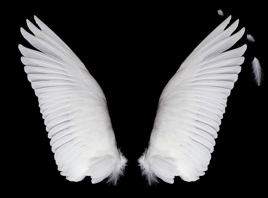 Wings On Black Background Photograph by Newbird