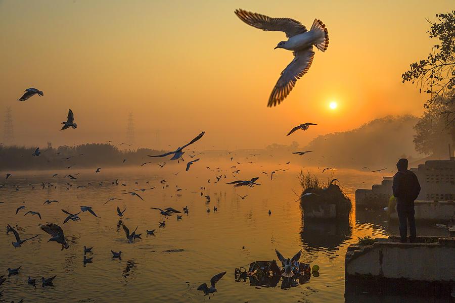 Yamuna Photograph - Wings Over Yamuna by Souvik Banerjee