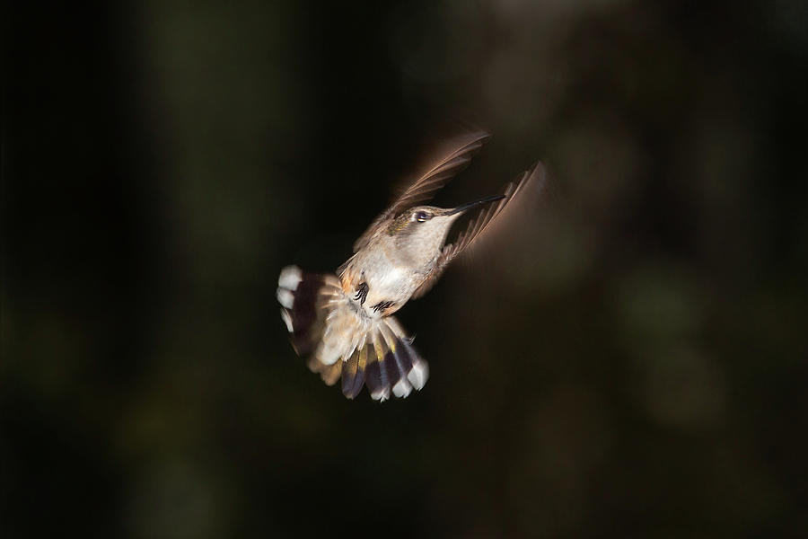 Wings Up by Douglas Tate