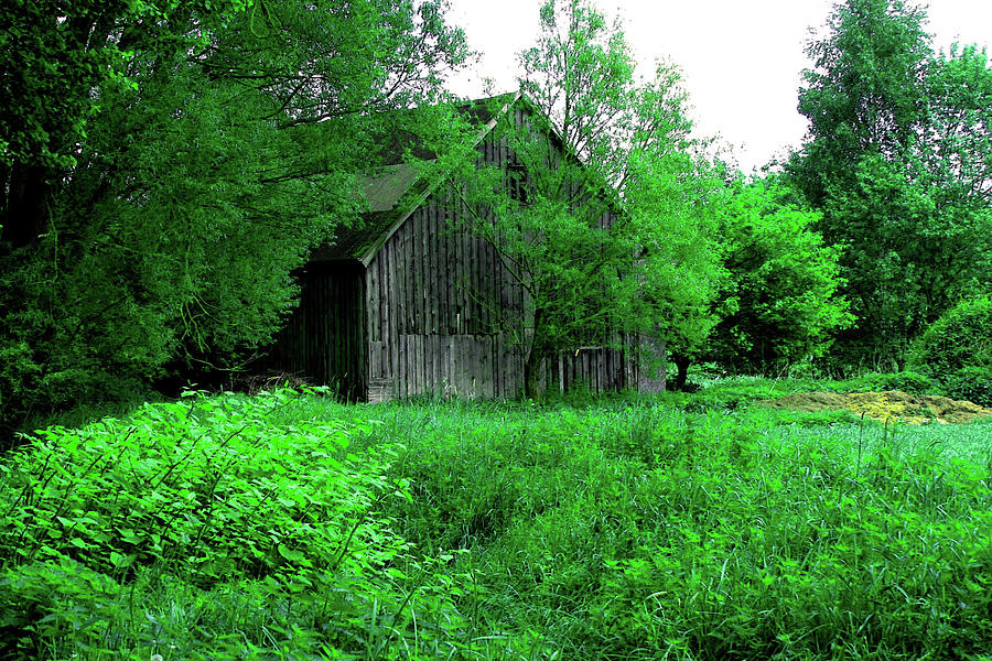 Germany Photograph - Winsen Luhe - Old Wooden Hut In The Green Meadow by Patricia Piotrak