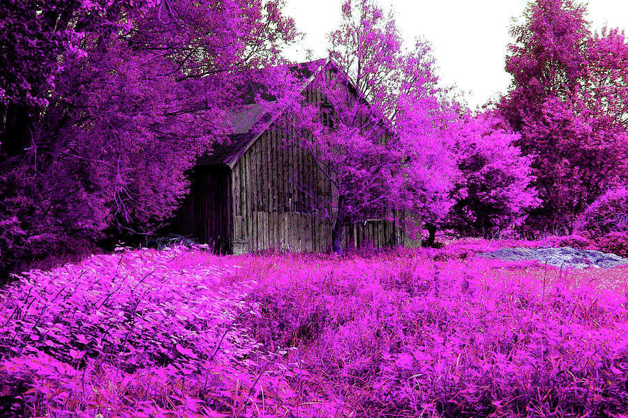 Germany Photograph - Winsen Luhe - Old Wooden Hut In The Pink-purple Meadow by Patricia Piotrak