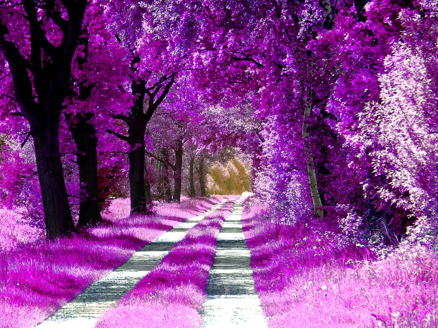 Winsen Luhe - The pink-purple forest by Patricia Piotrak