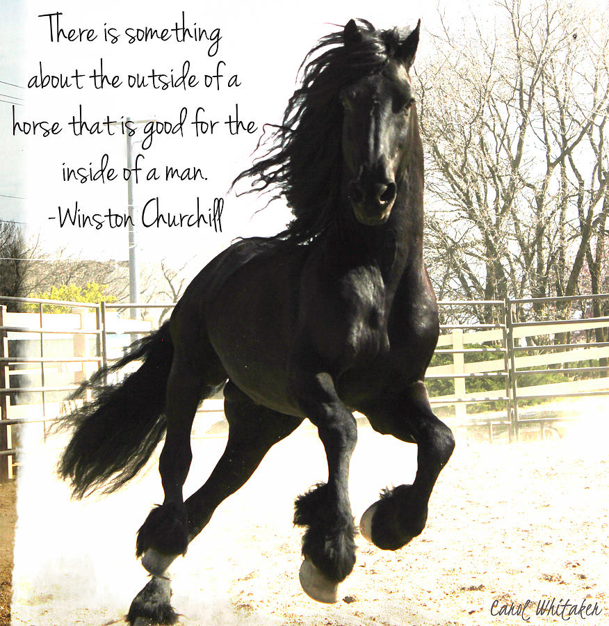 Winston Churchill Horse Quote by Carol Whitaker