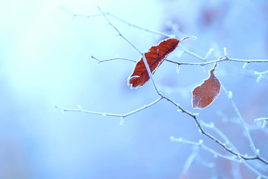 Winter Background By Bgfoto