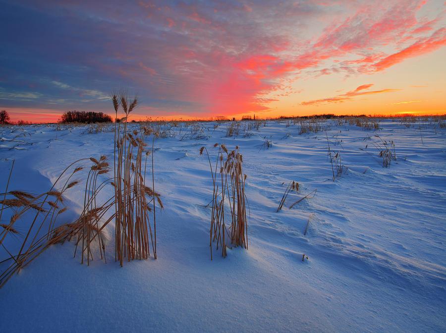 Winter Barley by Dan Jurak