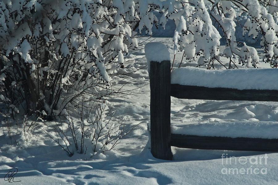 Winter Berries by Ann E Robson