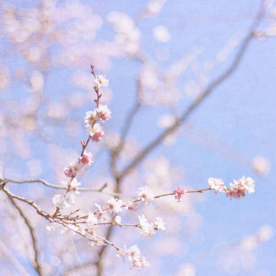 Winter Blossom Photograph by Jill Ferry