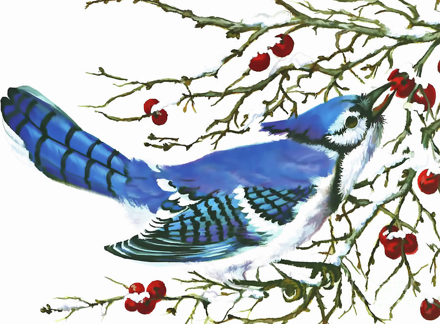 Winter Blue Jay by D Hackett