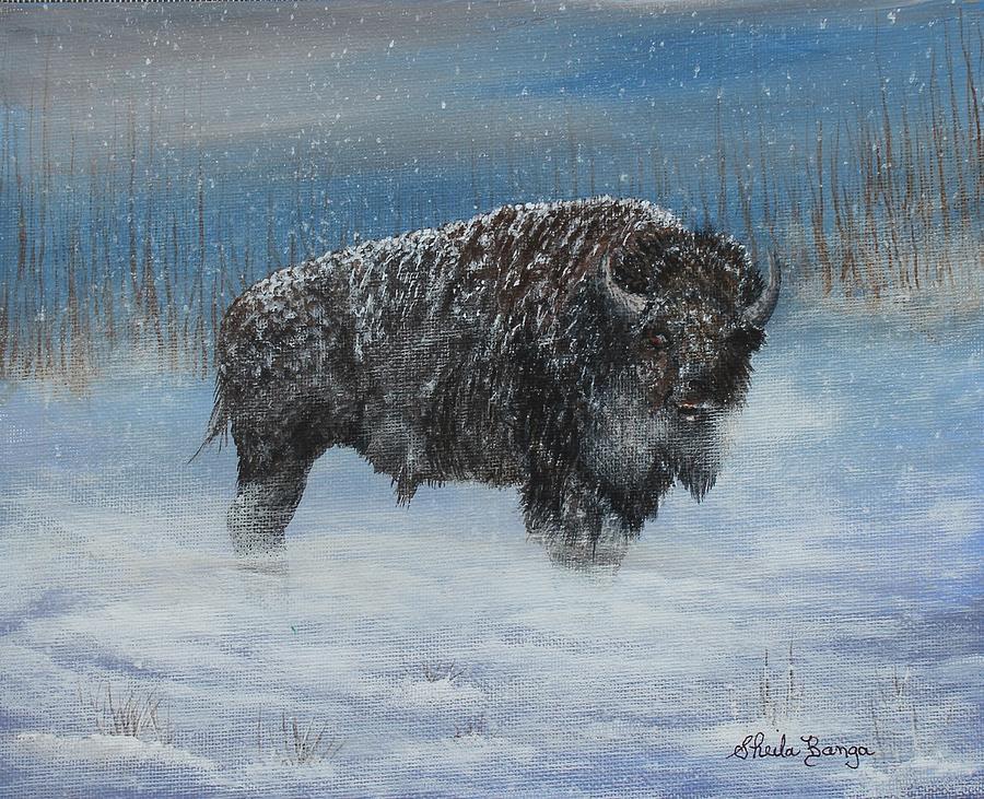 Winter Buffalo by Sheila Banga