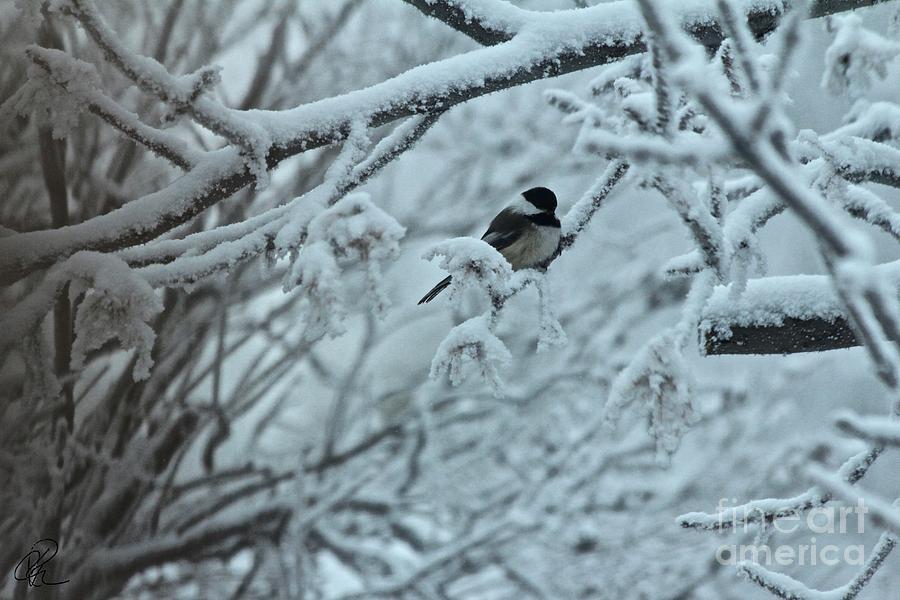 Winter Chickadee by Ann E Robson