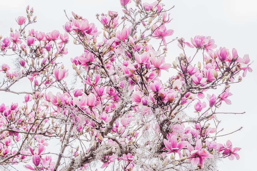 Winter Color by Christina Cone