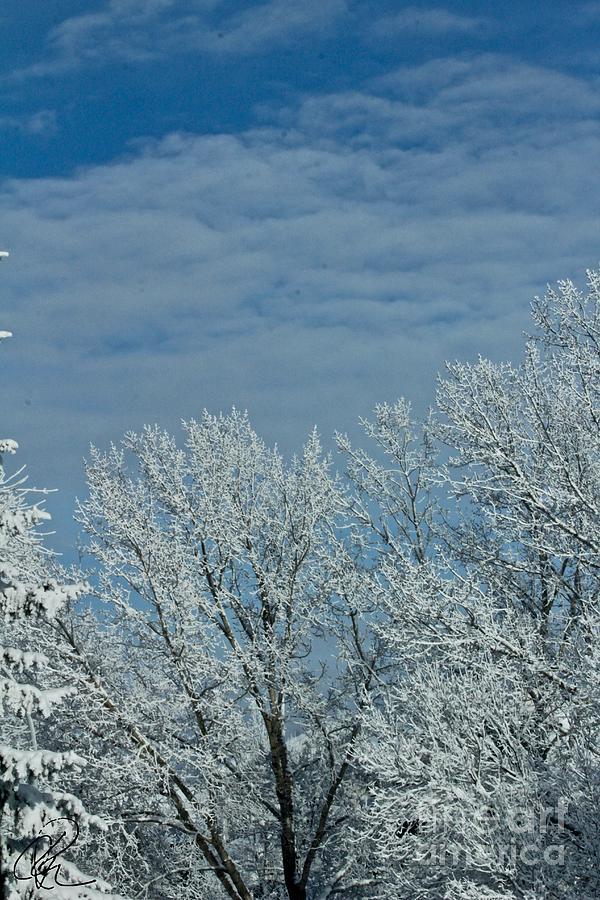 Winter Day by Ann E Robson