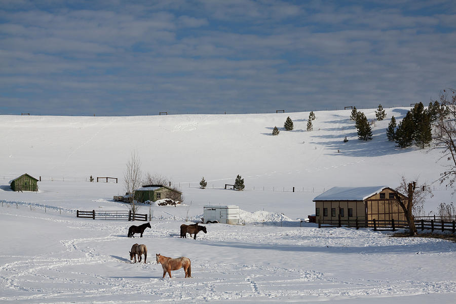 Winter Farm Washington by Tatiana Travelways