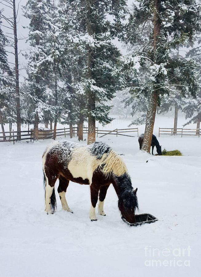 Winter feeding by Roland Stanke