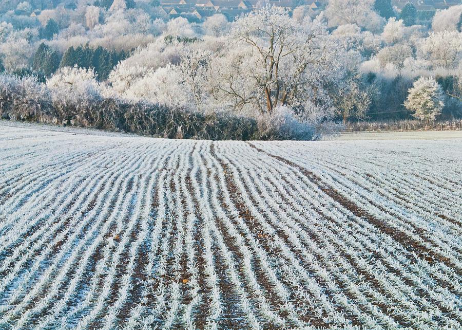 Cotswolds Photograph - Winter Field, Little Rissington, Gloucestershire by David Ross