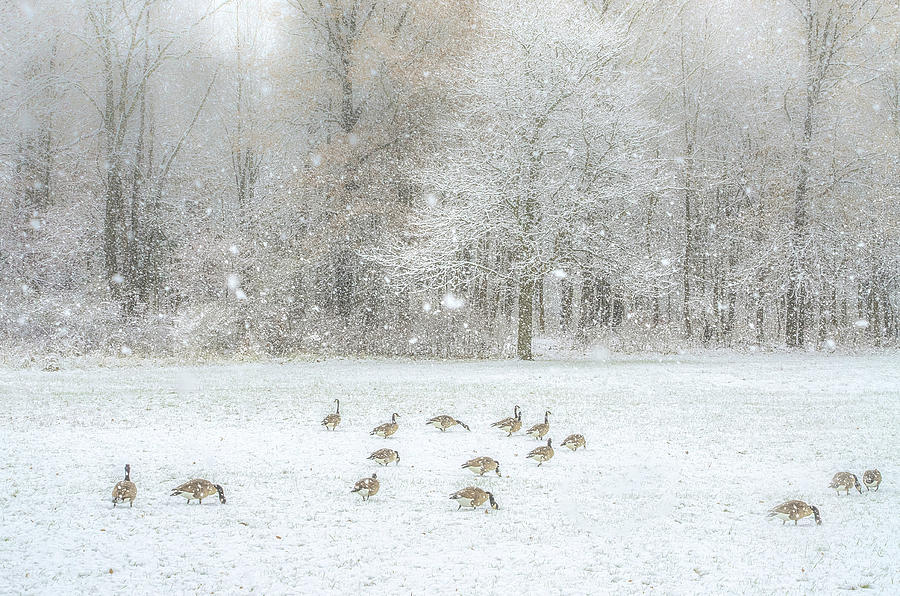 Winter Food Hunt by Julie Palencia