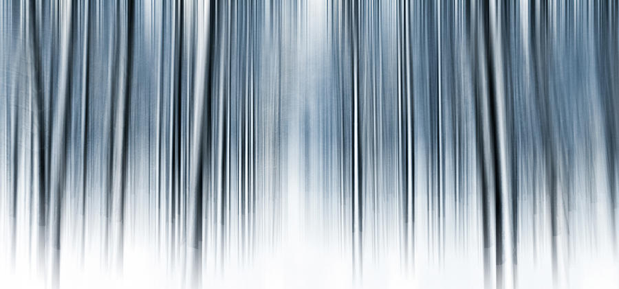 Winter Forest by Anne Leven