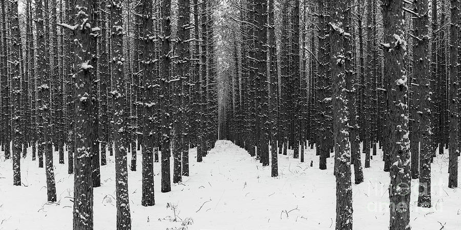 Sleeping Bear Dunes Photograph - Winter Forest In Black And White by Twenty Two North Photography