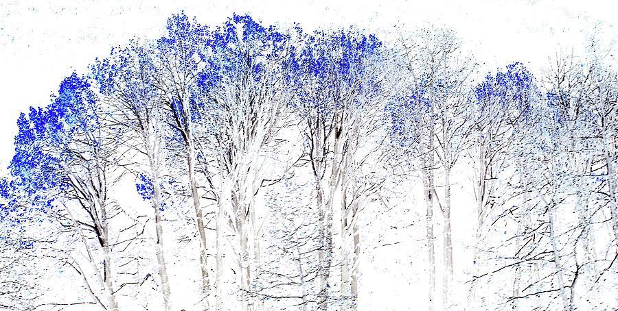 Winter Forest by Marcia Lee Jones