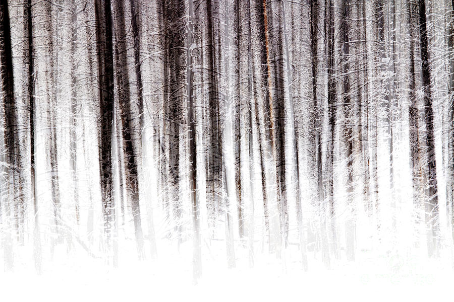 Winter Forest by Sonya Lang