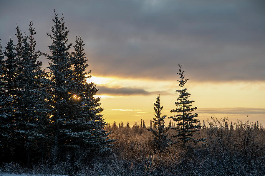 Winter Forest Sunrise by Mark Hunter