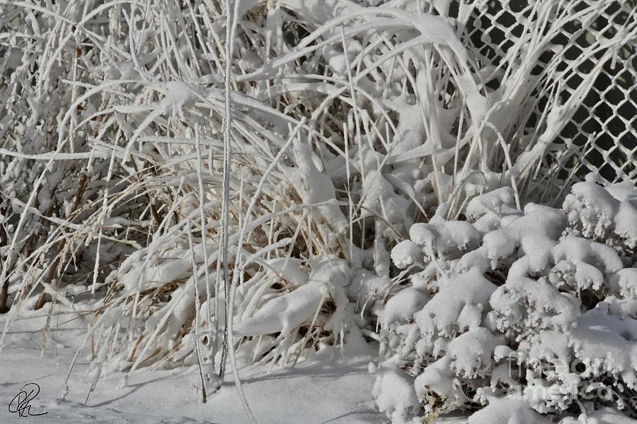 Winter Garden by Ann E Robson